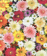 Table Cover - Printed Table Cover - Flowers Series Table Cover - F-1014